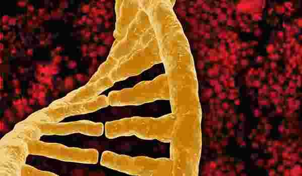 Exploit génétique : l'ADN d'un humain vieux de 400.000 ans reconstitué